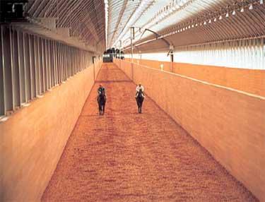Training Farms|japan Racing Association|horse Racing In Japan
