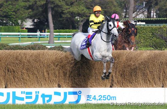 Nakayama grand jump betting on sports respawn cs go betting coach