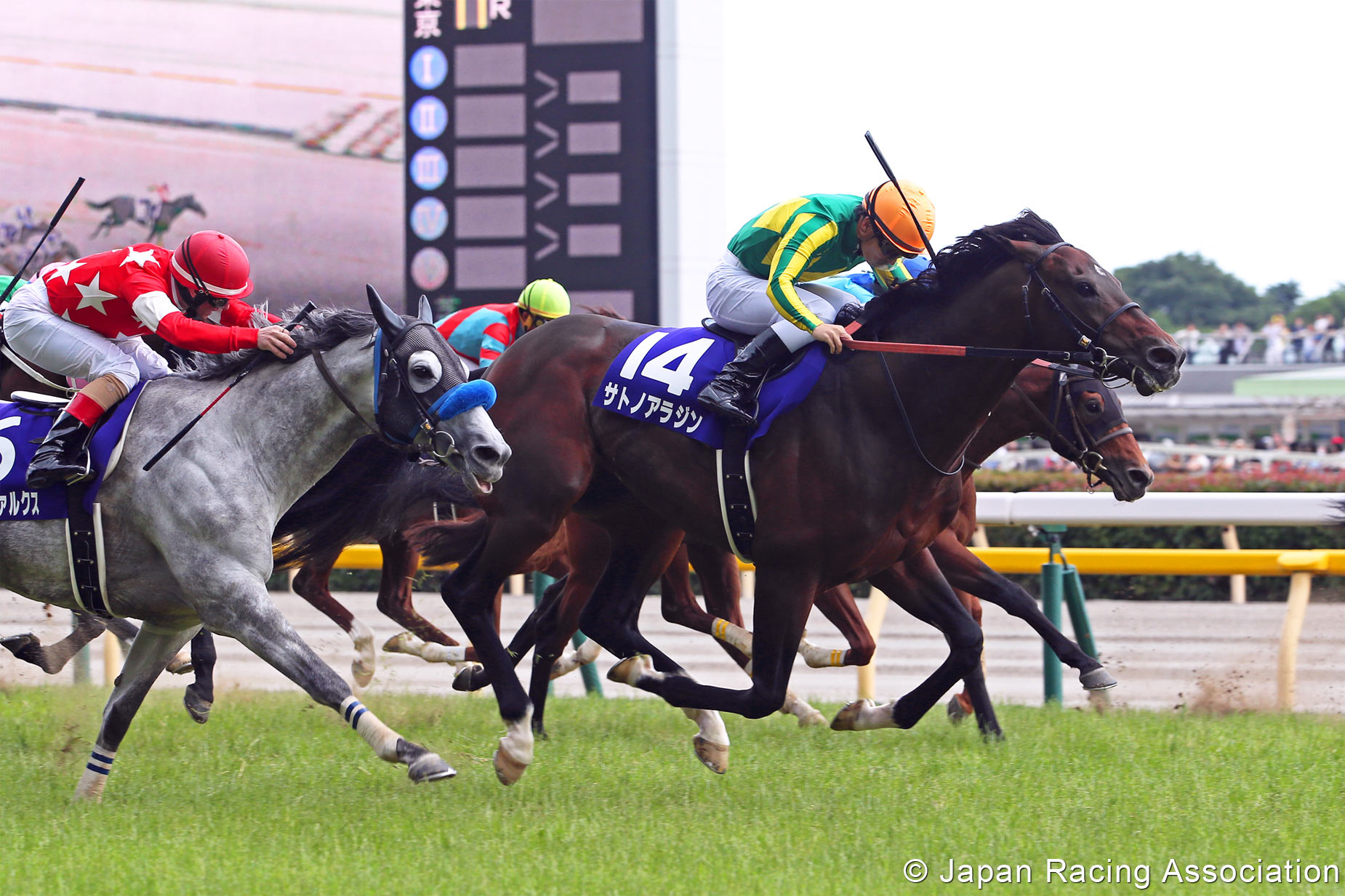 Yasuda kinen betting advice what does each way mean in golf betting
